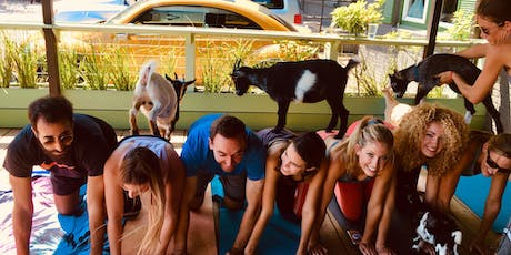 Goat Yoga Houston Nett Bar tickets