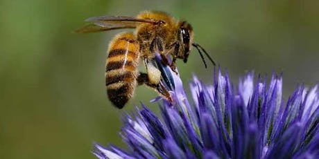 Green at Kathleen: Beekeeping 101 and Build your own Native Bee Hotel tickets