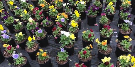 Fall Flower Potting Class tickets