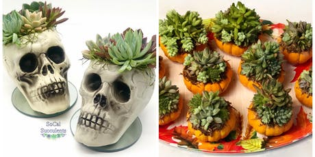 "Halloween ""SKULL""cculent Workshop -Succulent DIY Class tickets"