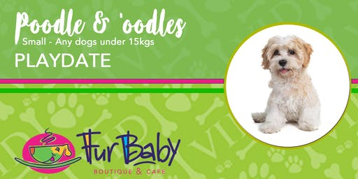 Poodles & 'oodles Playdate - Small
