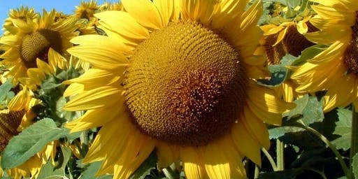 Sunflower Sessions - October School Holidays  @ Noarlunga library
