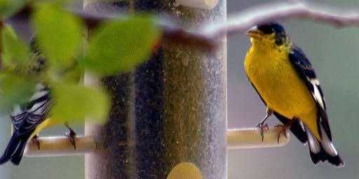 Build a Bird Feeder - October School Holidays @ Noarlunga library