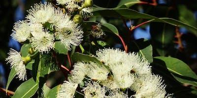 Aboriginal Plant Use Trail