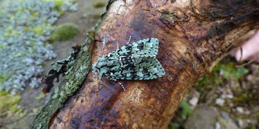 National Moth Night at Gosforth Park Nature Reserve
