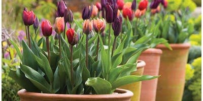 Bulb Planting Masterclass with Times and Star Columnist Toni Magean