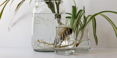 Cut, Grow, Share: Cuttings with PLANTMOM