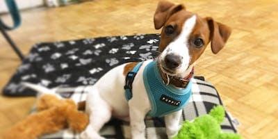 Puppy Life Skills. Bursledon 7.15pm