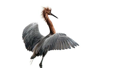 Bird Photography at Bolsa Chica with Karen Schuenemann - 2 Session Course tickets