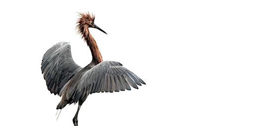 Bird Photography at Bolsa Chica with Karen Schuenemann - 2 Session Course