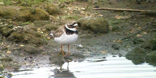Birdwatching Class: wetland and farmland