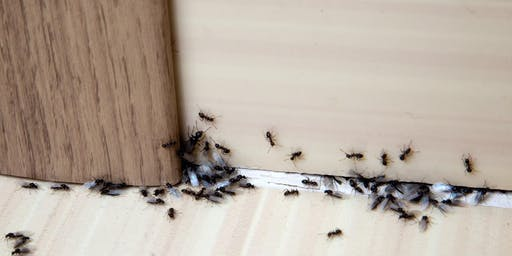 Indoor Insects And How To Get Rid Of Them