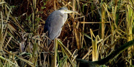 Birdwatching Class: wetland and woodland tickets