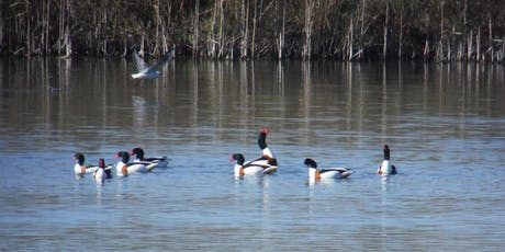 Birdwatching Classes: wetland and woodland birds tickets