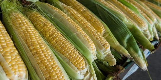 Oh No, it's a GMO!