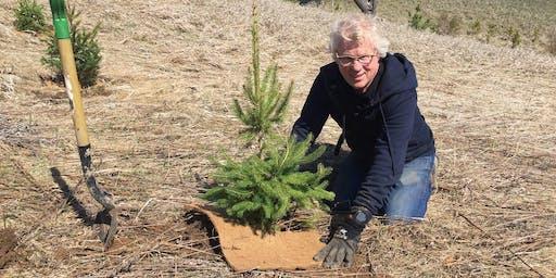 Orangeville Community Tree Planting