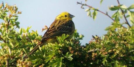 Birdwatching Classes: wetland, woodland and farmland birds tickets