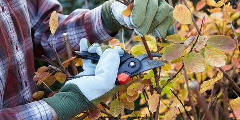 Fall Pruning Class