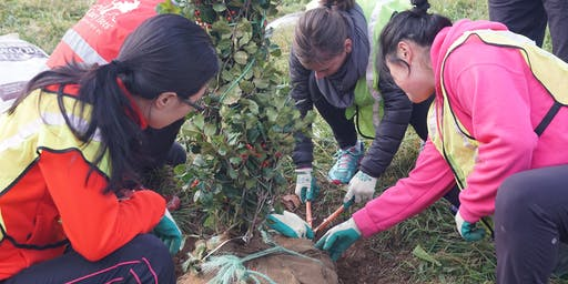 Volunteer: Community Tree Planting - Whitehurst