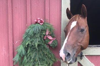 DIY Fresh Horse Head Wreath Workshop tickets