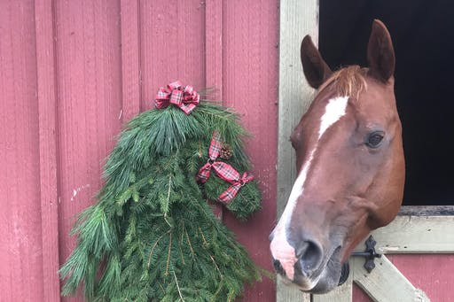 Oxford Feed & Lumber DIY Fresh Horse Head Wreath Workshop