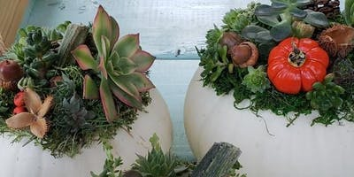 Succulent Pumpkin Workshop