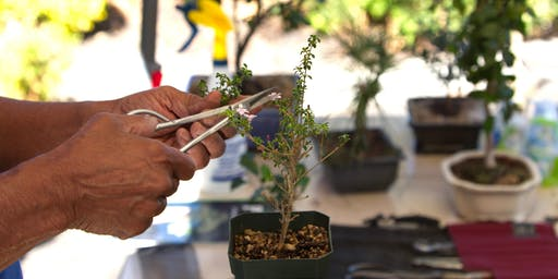 Free Bonsai Workshop and Plant Sale hosted by Exotic Plants