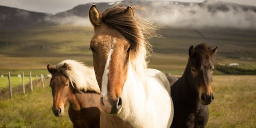 The Untethered Mustang: One Day Women's Personal Growth Workshop