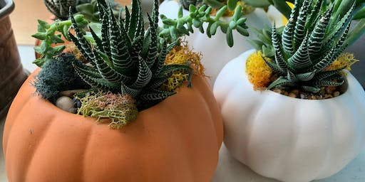 Sonder & Succulents: Pumpkin Arrangement Workshop