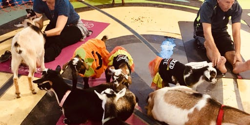 Goat Yoga Houston Friendswood Halloween Goats