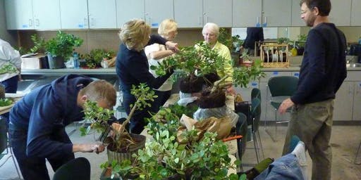 Bonsai Introduction workshop