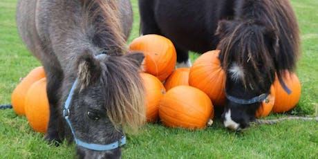 Pumpkins and Ponies tickets