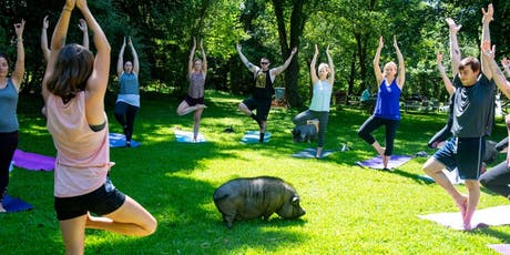 Yoga with Pigs with Alex October tickets