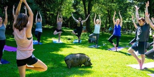 Yoga with Pigs with Alex October