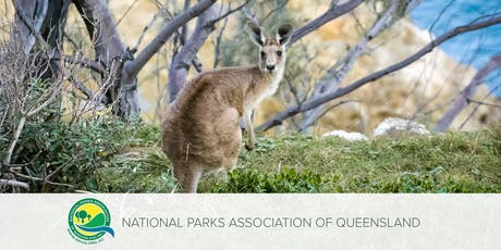 Money on Trees | Pros & Cons of Eco-Tourism in Queensland's National Parks tickets