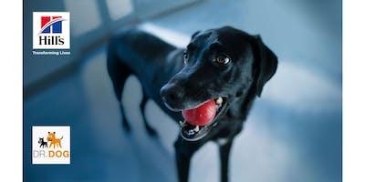 E lui come ti vede? I comportamenti più strani dei cani... e degli umani!