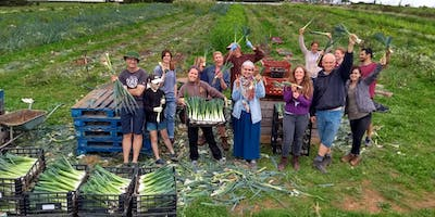 Community Farmer Day - 21 Sept - leeks, tomatoes and beans!
