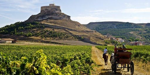 A Rioja for all occasions: wine tasting