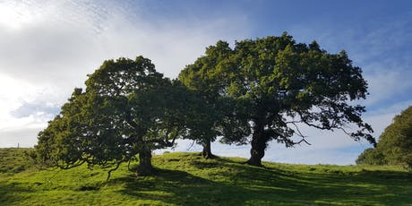 Ancient Tree Forum : Site visit & guided walk tickets