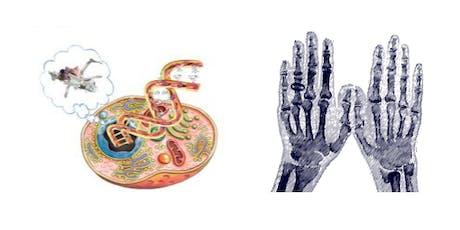 Biology Week Build a Human & Hand Engineering tickets