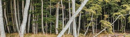 Basic Tree Survey & Inspection (LANTRA certificate)