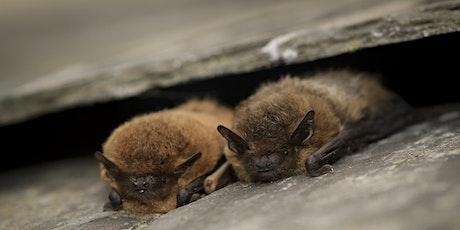 Bat Ecology tickets