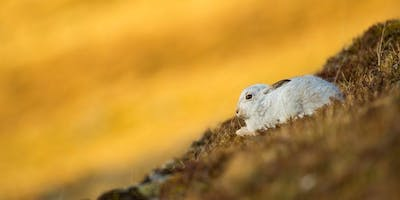 Mountain Hare Walk