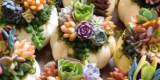 Succulent Topped Pumpkin Workshop at True Food Kitchen King of Prussia
