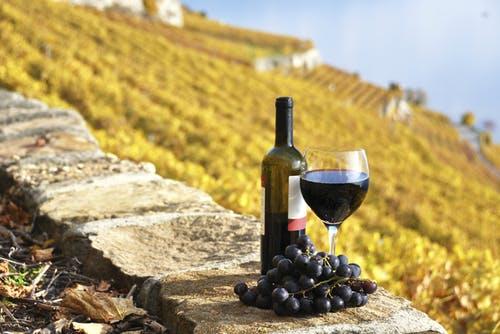 Blind Wine Tasting: West Coast Reds
