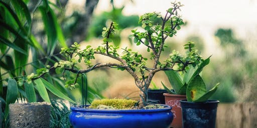 The Care & Keeping of Bonsai