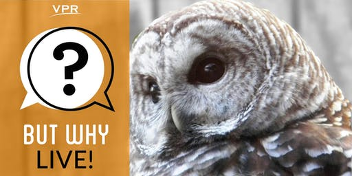 But Why, Live! Hoots And Whistles — 11:00 a.m. show