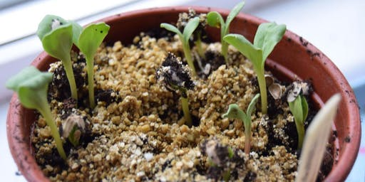Sowing and growing flowers from seed Workshop - Autumn sowing