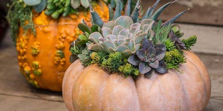 Succulent Pumpkins at Aftermath Cidery tickets