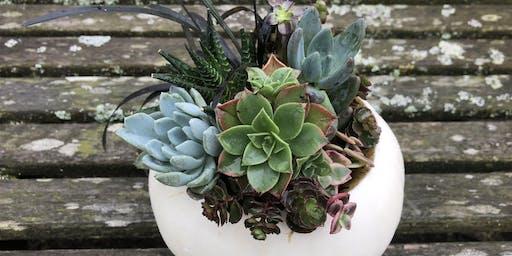 Pumpkin Plant and Paint